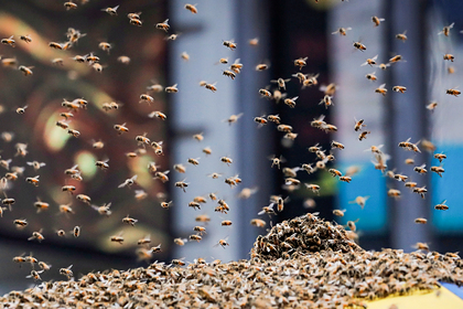 Агрессивные пчелы покусали бывшего полицейского и погубили двух его собак
