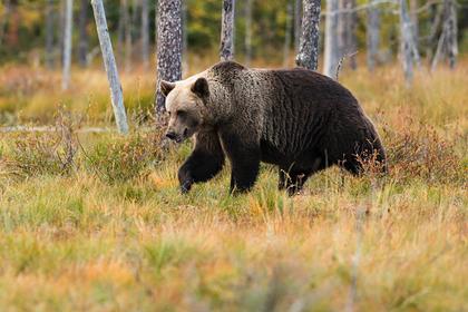 Выжившие после нападения медведя в парке россияне рассказали о случившемся