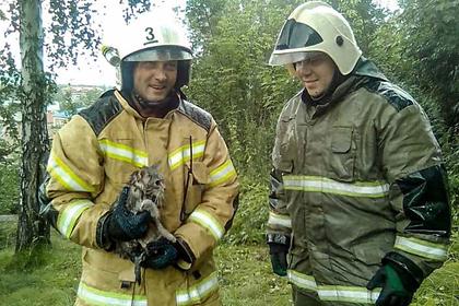 На Алтае спасли просидевшего шесть дней на дереве кота