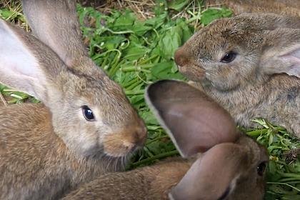 Россиянка стала кролиководом и сделала дачу свободной от стресса зоной