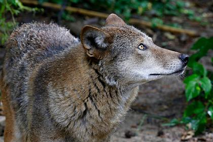Приближение катастрофы обострило конфликт человека с дикой природой