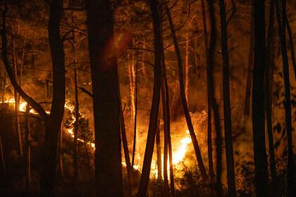 Названа возможная причина лесных пожаров в Турции