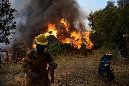 Грецию охватили десятки лесных пожаров