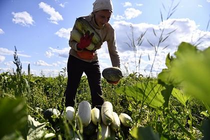 Россиян предупредили о фейковых предложениях на рынке труда