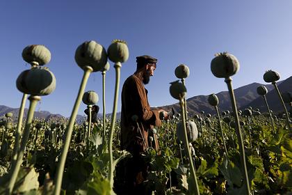 В МИД указали на провал инициатив США по борьбе с наркотиками в Афганистане