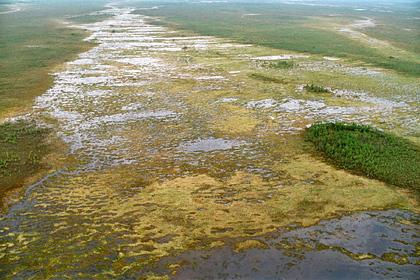 Томский заповедник сделает центром экотуризма самое большое болото в мире