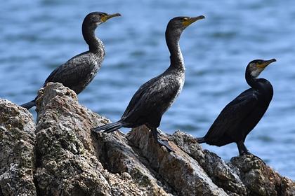 В Крыму увеличилась численность краснокнижных птиц
