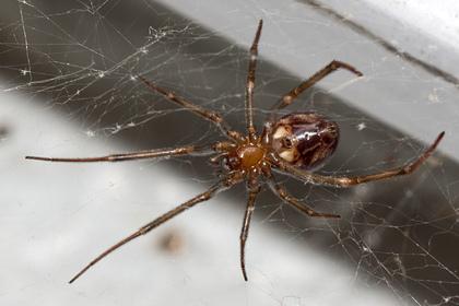 Мальчик пережил укус ядовитого паука и увидел оживших героев мультфильма