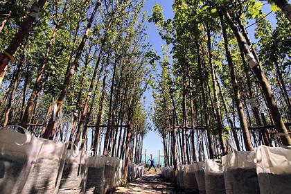В Саратовском парке посадят сотни новых кустов и деревьев