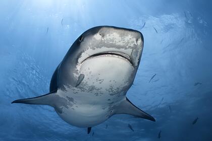 Акула напала на мужчину и откусила ему руку