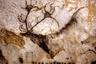 Пещера Ласко представляет собой комплекс находящихся на разных уровнях залов и проходов между ними. За ними закрепились те названия, которые им дал Анри Брей во время своих первых обследований объекта. Из «зала быков» можно попасть в «осевой проход» и «пассаж». За первым находится «неф», из которого можно попасть в «кошачий лаз». На стыке «нефа» и «осевого прохода» находится «апсида» — круглый зал, из которого можно спуститься в «шахту».