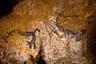 Одна из самых загадочных сцен Ласко находится в «шахте»: человек с головой птицы «падает» между бизоном и носорогом. Рядом с ним изображен удлиненный предмет, увенчанный фигурой птицы. По мнению археолога и антрополога Андре Леруа-Гурана, сцена является отсылкой к древнему неизвестному мифу.