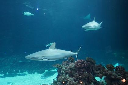 В Египте заявили о безопасности моря после новостей об атаке акулы на дайвера: Мир: Путешествия: Lenta.ru