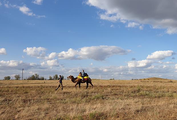 Катание на верблюде — популярный у туристов аттракцион