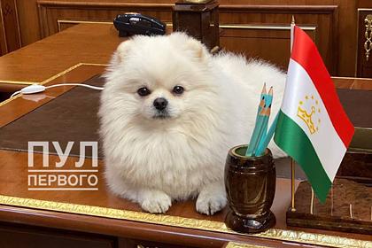 Пес Лукашенко улегся на столе в резиденции президента Таджикистана