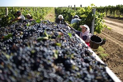 Две российские винодельни вошли в рейтинг лучших в мире