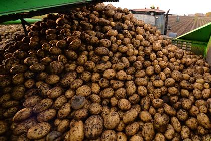 Украина оказалась главным поставщиком картофеля в Белоруссию