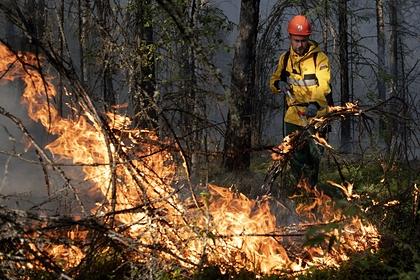 Пожары в России назвали одной из причин катастрофического загрязнения планеты