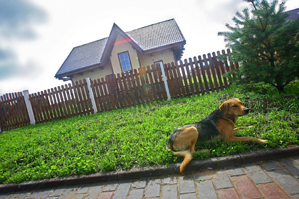 Россиян предупредили о возможном запрете на содержание кошек и собак на дачах