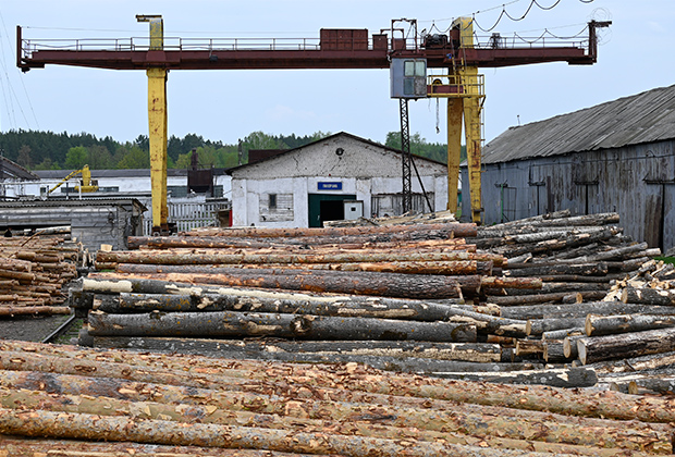 Заготовка леса в одной из колоний Мордовии