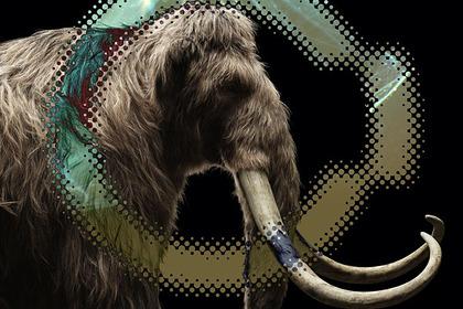 В Якутии оценили шансы заселения региона клонированными американскими мамонтами