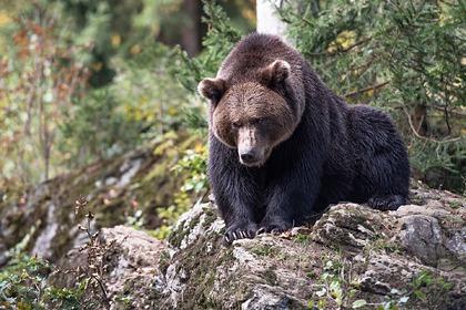 Жители арктического региона получат наборы для отпугивания медведей