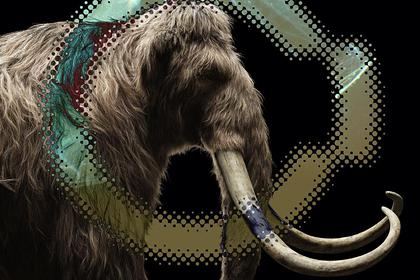 В России оценили шансы американцев клонировать мамонтов