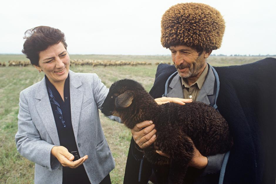 Азербайджанская ССР. Руководитель Ахсуйского района Алмаз Кафарова посещает животноводческие хозяйства