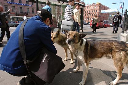 Казанские волонтеры пересчитают бездомных собак