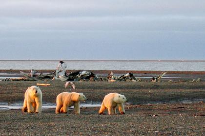 Ученые выяснили причину изменения климата в Арктике