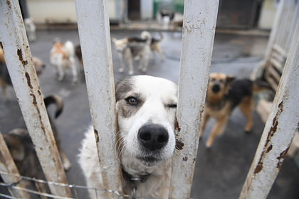 Зоозащитники рассказали о расправе над собаками в воронежском приюте
