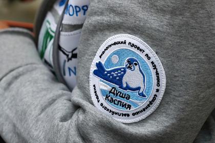 Россияне захотели спасти в Астрахани самого маленького тюленя на планете
